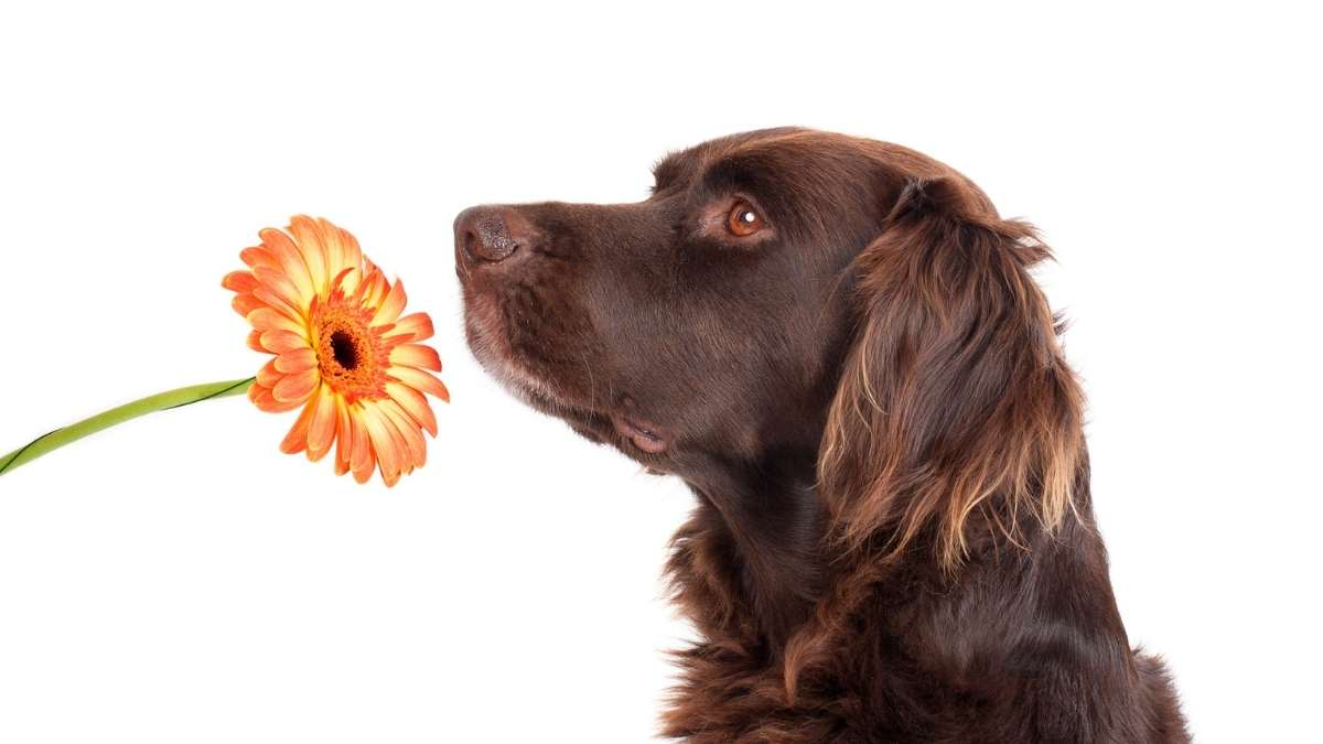 Why Does My Dog Smell Like Fish?Find Out to get Rid